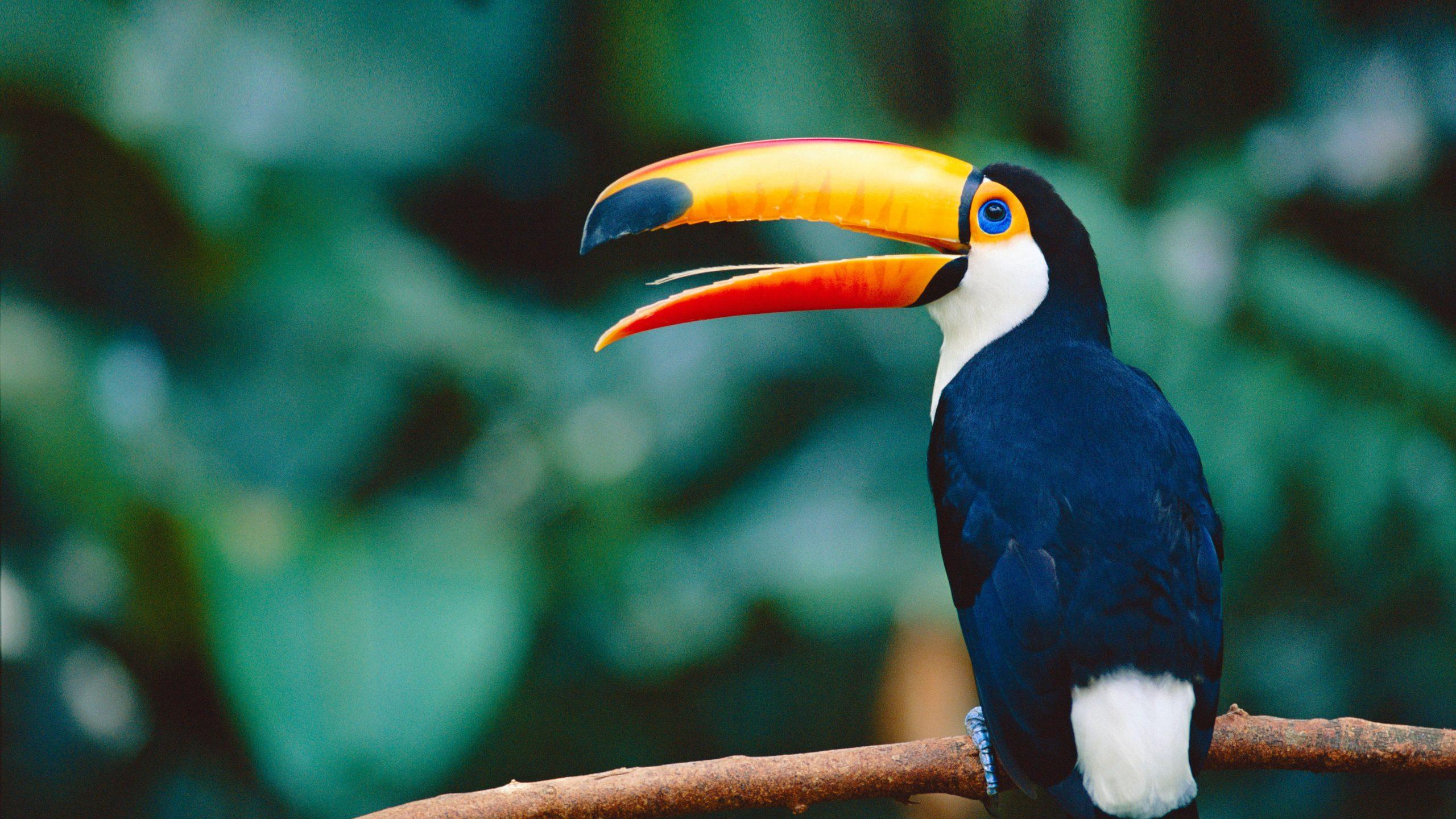 Tucan Bird WWF_edit3